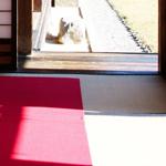 高野畳店の心地よい和紙畳